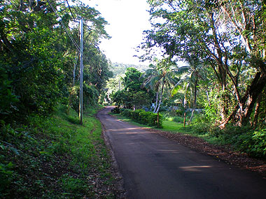 The Road to the Beach